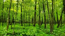 Green forest and grass covering entire frame.